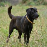 Top 3 Service Dog Breeds and Why