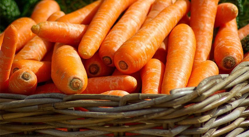 carrots - 3 Best and Healthiest Human Foods for Dogs