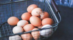 egg 300x166 - egg